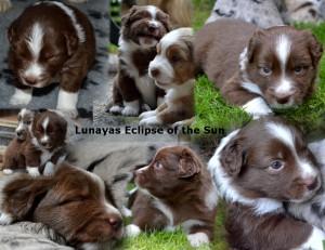 Eclipse Week 3 en 4