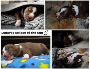 Eclipse week 1