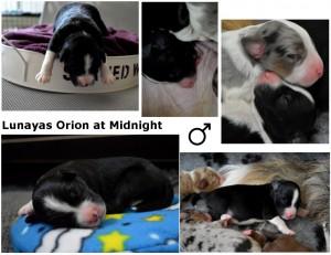 Orion week 1