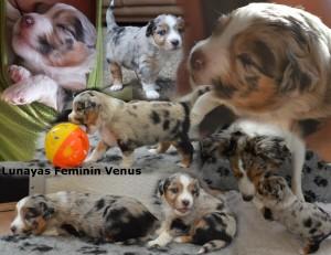 Venus Week 3 en 4