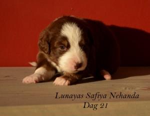 Safiya dag 21