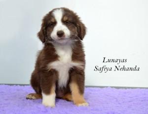 Safiya front